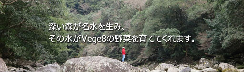 vege8 深い森 美しい水