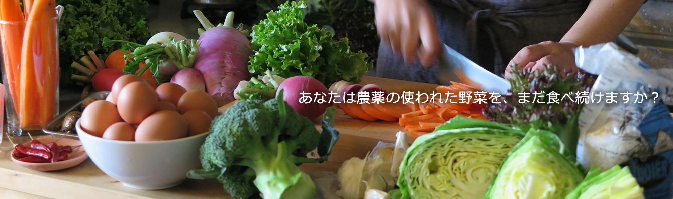 有機野菜セット vege8