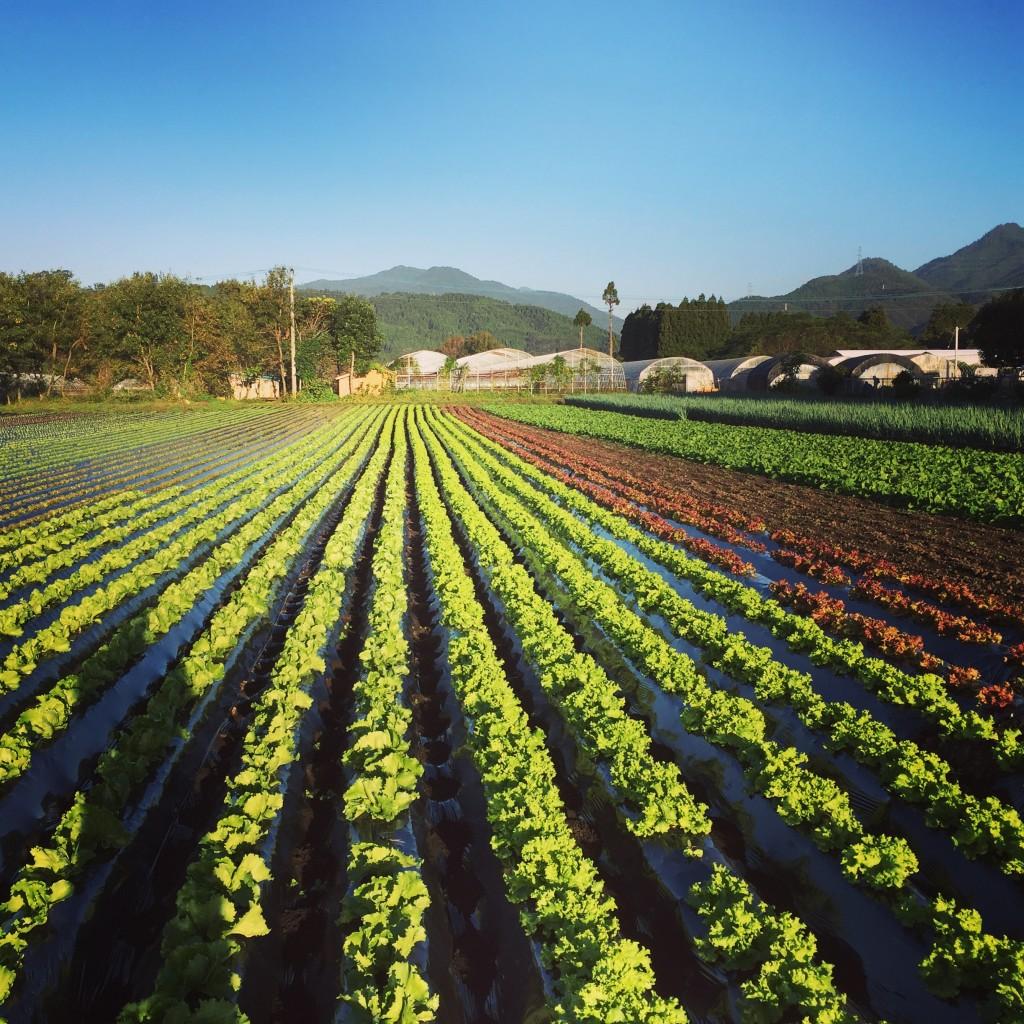 vege8 有機栽培 野菜セット