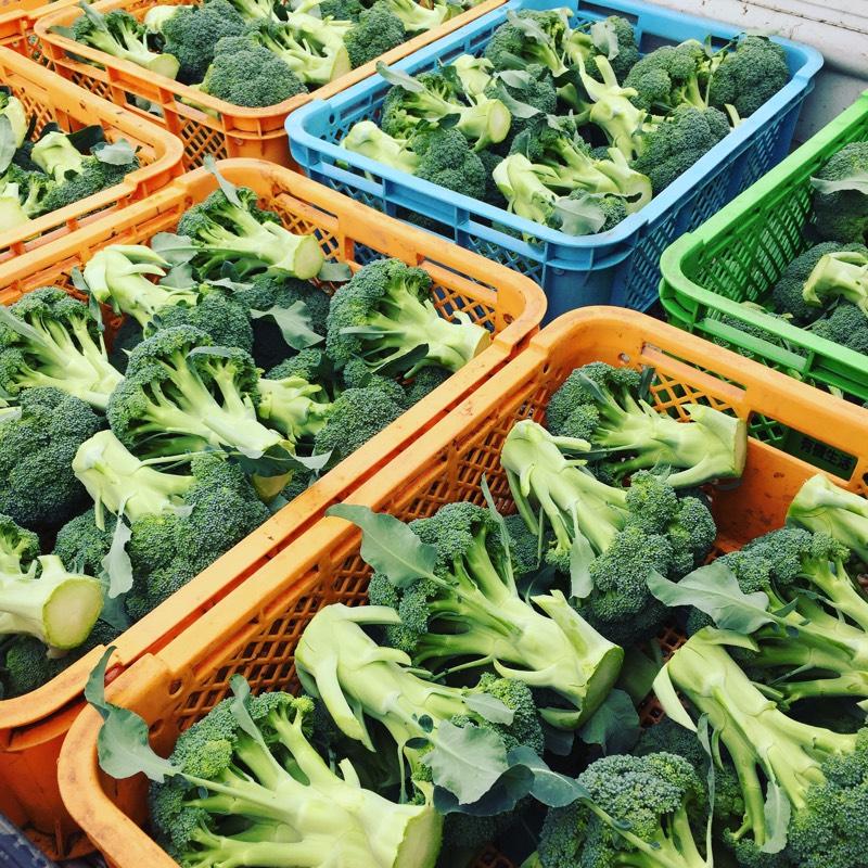 有機野菜セット ブロッコリー