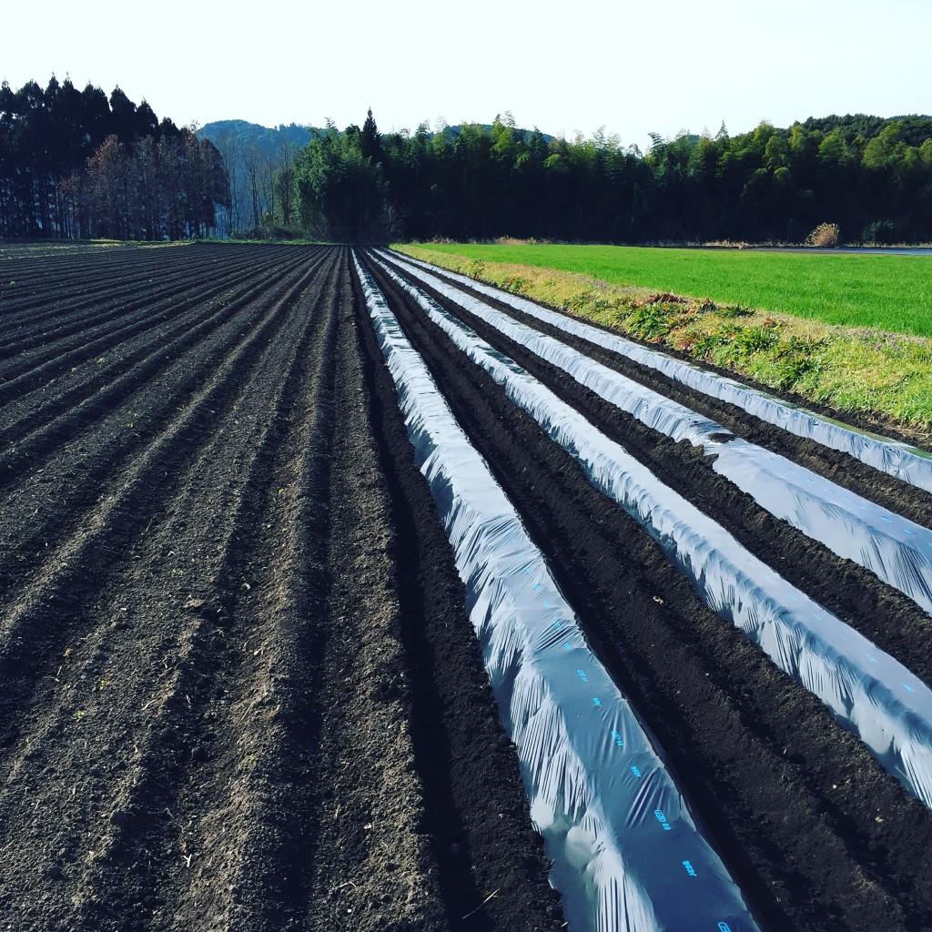 vege8 ジャガイモ畑