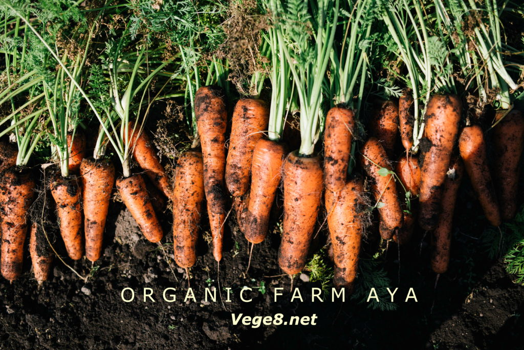 vege8 organic carrot
