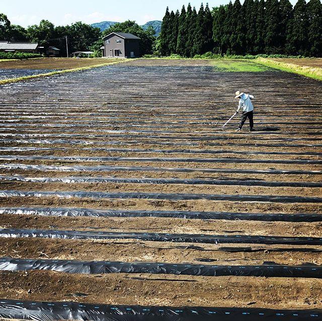 生姜畑の小さな草を除草中。梅雨前に除草を終えると、夏の除草が楽です。#organic #simplelife #生姜 #綾町 #無農薬栽培 #ginger #草むしり