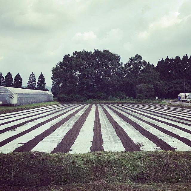 人参の種を蒔く畑の準備中。透明のビニールを貼り、土中の酸素を断つと、なぜか微生物のバランスが整います。自然には僕らの知らないことばかり。#organic #綾町 #人参 #有機野菜 #livesimply #無農薬栽培 #vege8