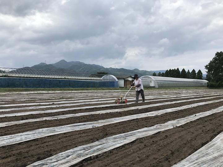 ジュース用無農薬栽培有機冬人参 種まき