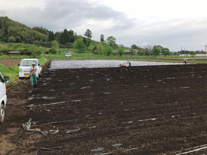2017年、有機栽培、農地無し、ショウガ、植え付け