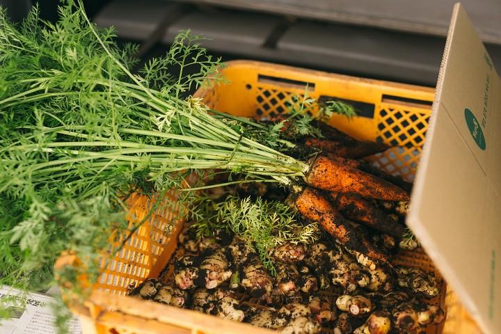 organic carott&ginger vege8